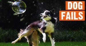 Funny Dog Fails | 1/2019