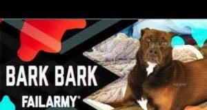 Bark Bark: Dog Fails (August 2018) | FailArmy  # 463