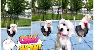 Cute dog enjoying swing | Funny Video | Dog Love |