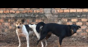 Wow!!! Amazing Videos Real Dog Meeting On The Street ~ Funny Animals Pets And Rural Puppy