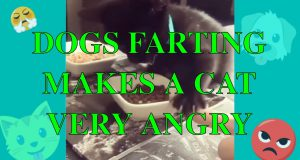 Try Not to Laugh ✪ Funny Cats Compilation ✪ DOG FARTS MAKE CAT ANGRY 😡 ✪ #3