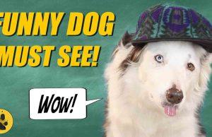 Funny Dog Sticks Out Tongue