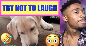 TRY NOT TO LAUGH - Funny Animals Video Fails 2019 - Why Are Dogs So Weird - ALAZON REACTION EPI 647