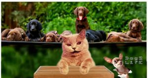 The Best Funny Dog 's and Cat 's Compilations Channel  huffington post [ Dogs Life ]