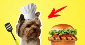 Funny dog Boo makes the Burger