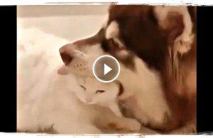 СЪЕСТ ИЛИ НЕТ (приколы с собаками) | FUNNY DOGS (funny animals) #658