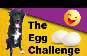 """My dog tries """"The Egg Challenge""""! (Fails included)"""