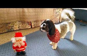 Funny Dogs who Don't Like Christmas