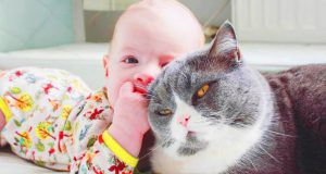 Best Funny Fails Baby and Cat - Cute Baby Videos