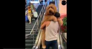 Funny Video of Dog Who is scared of escalator
