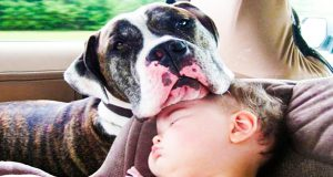 Cute Baby and Dogs Sleeping  - Funny Cute Videos