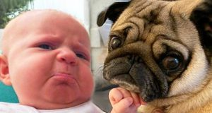 Cutest Babies Playing With Dogs - Baby and Dog Video