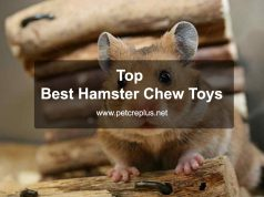 Top 35 Best Hamster Chew Toys