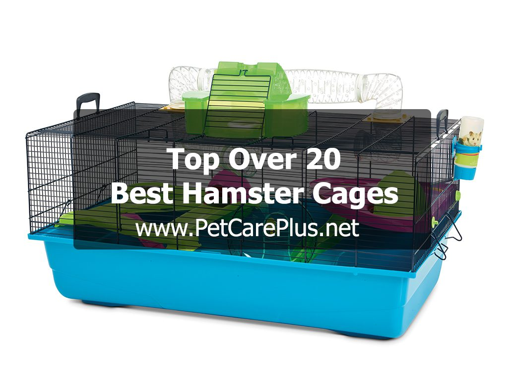 Top Over 20 Best Hamster Cages - Pet Care Plus