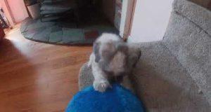 Nike Loves His Big Ball - Funny Dog Videos