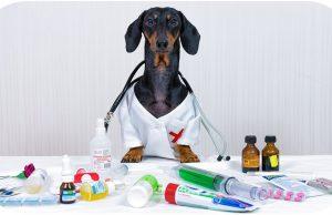Сutest Dogtor ever! Funny dachshund dog video!