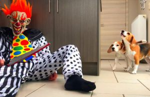 Dogs vs IT Chapter Two PRANK : Funny Dogs Louie and Marie