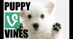 Best Dog/Puppy Vine Compilation - Dog/Puppy Funny Vines - Cute Puppy's