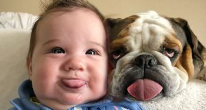 Try Not To Laugh With Funniest Moment Baby Playing With Dog - Funny Moments Video