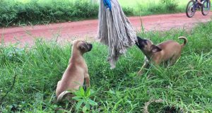 Enjoy Amazing Impressed dog puppy funny video - Daily Animals