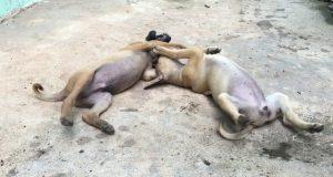 Enjoy Amazing Dog dodo and July puppy Funny videos - Daily Animals