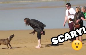 VICIOUS DOG ATTACKS PEOPLE ON BEACH
