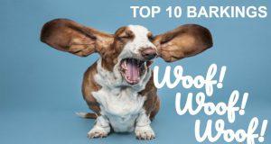 TOP 10 dog barking ♥ Dog barking sound ♥  Funny dogs