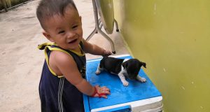 My Nephew and small dog, Funny baby and dog playing together,