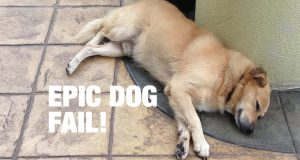 Epic dog fail #dogfail #9gag #doggag #ninegag