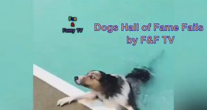 The Top 29 Dog Fails: Hall of Fame (September 2019)