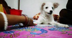 Dog funny video || puppy sound