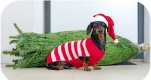 How to choose Christmas tree? Cute & funny dachshund dog video!