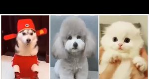🤣TRY NOT TO LAUGH!!! 🐈Cats & Dogs Funniest Compilation- Cutest Pets 2019