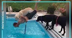 Try Not To Laugh Watching this Funny Dogs Compilation || Monkooog