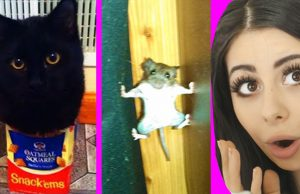 The Funniest Animal Fails Ever (IMPOSSIBLE NOT TO LAUGH)