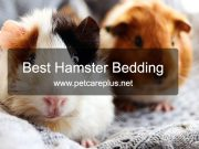 Best Hamster Bedding