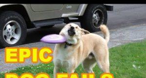Epic Dog fails l Dummy Dog l Fail Compilations