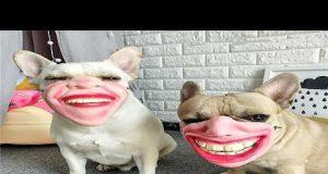 Pug Dog 🐶 Funny   Awesome   NEW Compilation! 😇