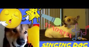 TRY NOT TO LAUGH🤗😜 DOG SING'S😜😂🤣