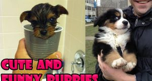 Cute Baby Dogs Compilation #6 - Cute Puppies Doing Funny Things   Cutest Puppy Ever In The World
