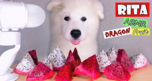 ASMR Dog Eating & Funny Reacts DRAGON FRUIT Mukbang