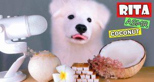 ASMR Dog Eating & Funny Reacts COCONUT Mukbang (Crunchy Sounds)