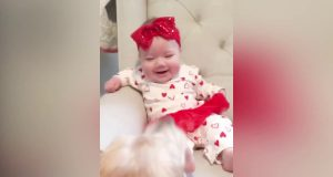 TOP 100 Cutest Dog Makes Baby Laugh  - Funny Cute Videos