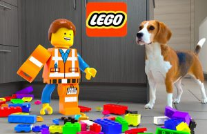 LEGO EMMET IN REAL LIFE VS FUNNY DOGS!!!
