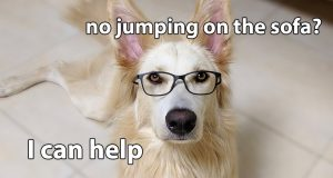 Funny Dog Training Tips and Tricks for Dogs
