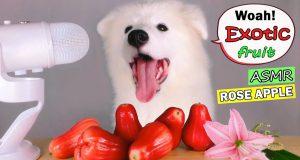 ASMR Dog Eating & Funny Reacts ROSE APPLE (Exotic Fruit) Mukbang