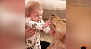 TOP 100 Cute Baby And Dogs Moments - Funny Baby Video