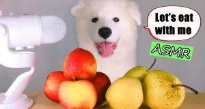 ASMR Dog Eating & Funny Reacts APPLE vs. PEAR Mukbang
