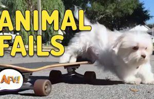 Funny Animal Fails   AFV Funniest Fails December 2018