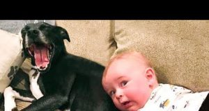 Baby and Dog are Best Friends - Funny Baby and Pets Video